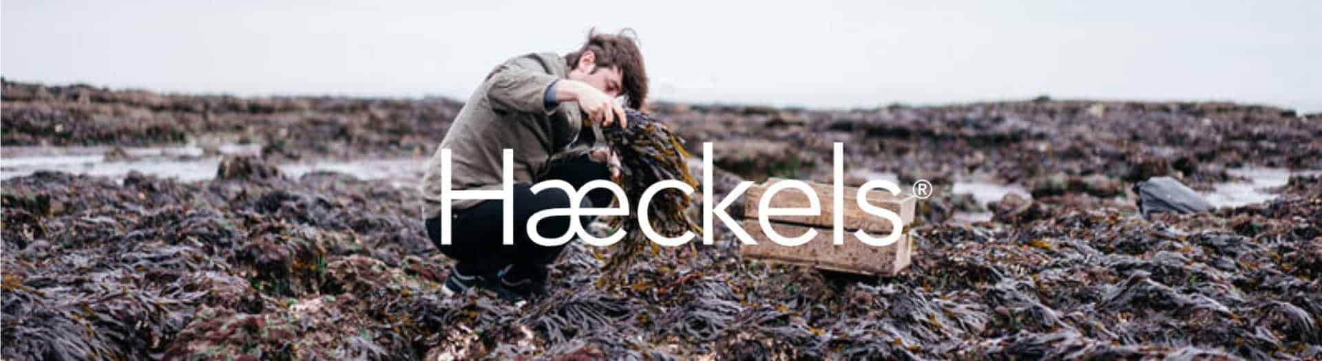 British Made Seaweed Skincare Haeckels man on beach picking seaweed