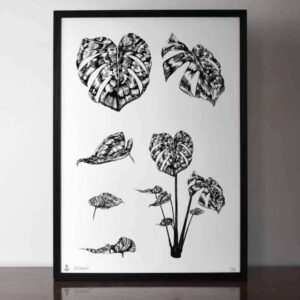 Monstera Botanical Limited Edition Print
